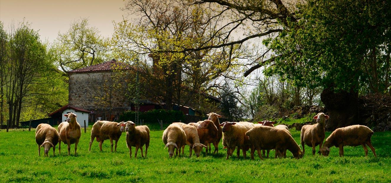 quesos-ovejas-navarra